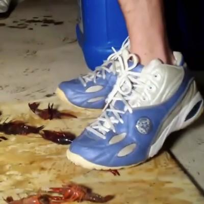 Shawn Converse Craw Floor