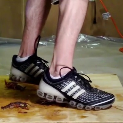 Shawn Adidas Craw Floor