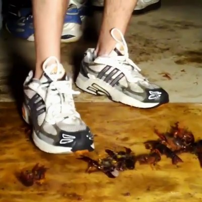 Shawn Adidas 2 Craw
